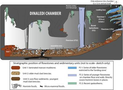 20151021130243-cartoon-illustrating-the-geological-and-taphonomic-context-and-distribution-of-fossils-sediments-and-flowstones-within-the-dinaledi-chamber.jpg